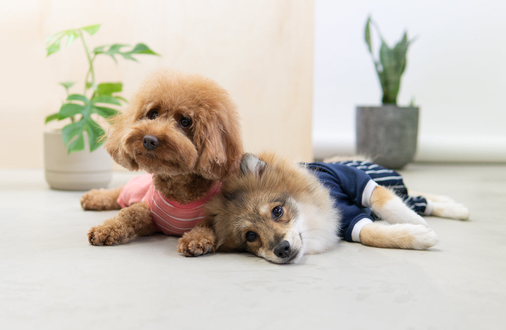 Should Dogs Wear Clothes - The Pros and Cons