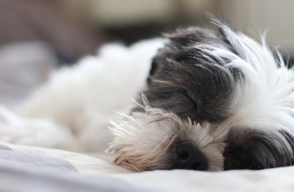 THREE Reasons You Should Let Your Dog Sleep with You