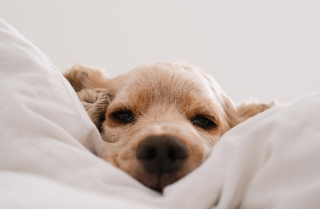THREE Important Reasons why your dog needs a bed