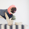 Denim Blue Striped Hoodie, Dog Hoodie, Ohpopdog