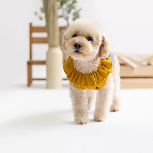 Mustard Ruffles Dress, Dog Dress Top, Ohpopdog