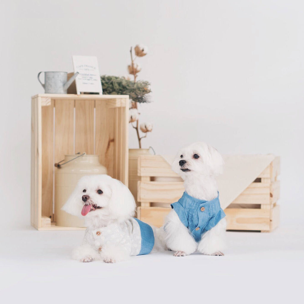Soft Denim Pintuck Shirt, Dog Shirt, Ohpopdog