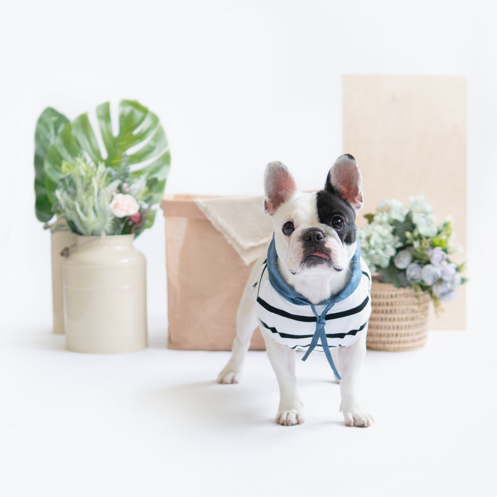 Blue Linen Striped Hoodie, Dog Hoodie, Ohpopdog