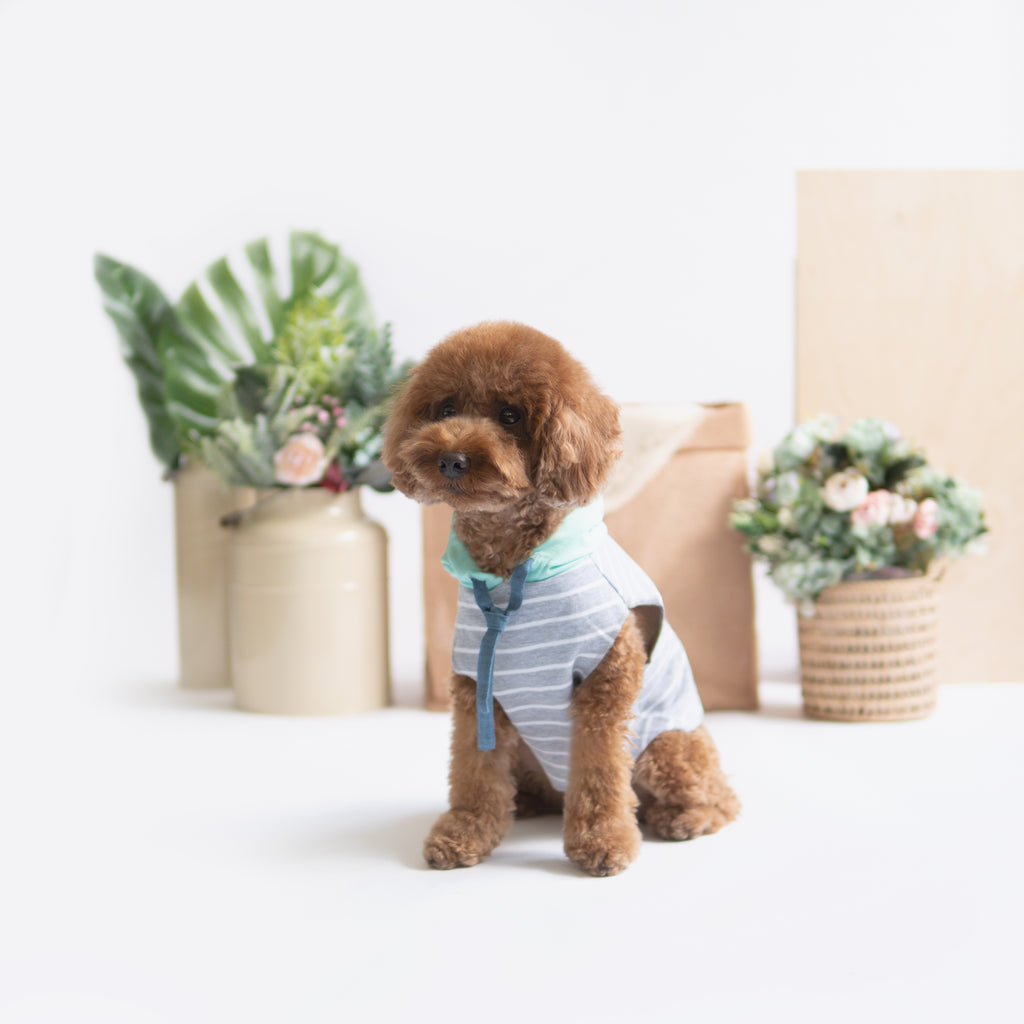 Mint Grey Striped Hoodie, Dog Hoodie, Ohpopdog