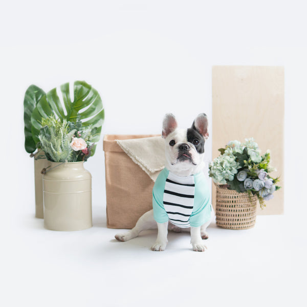 Mint Striped Raglan, Dog Tshirt, Ohpopdog