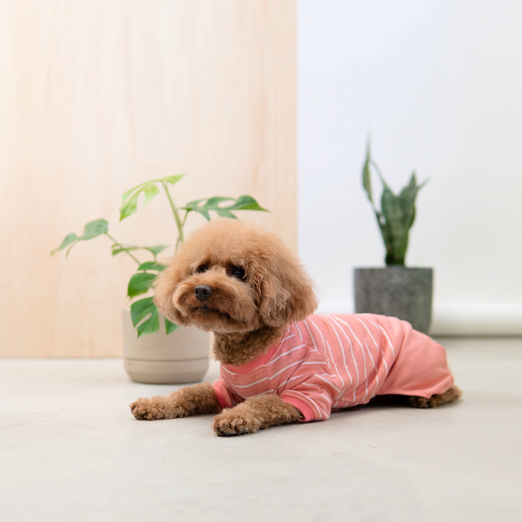 Snug-in Striped Onesie, Dog Tshirt, Ohpopdog