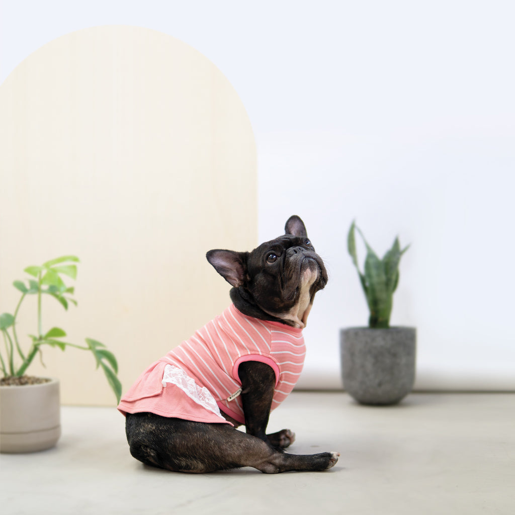 Snug-in Striped Dress Top, Dog Tshirt, Ohpopdog