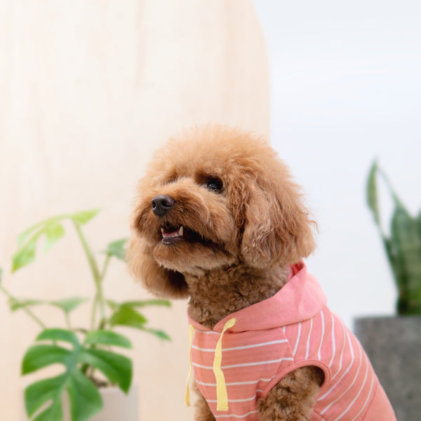 Snug-in Striped Hoodie, Dog Tshirt, Ohpopdog