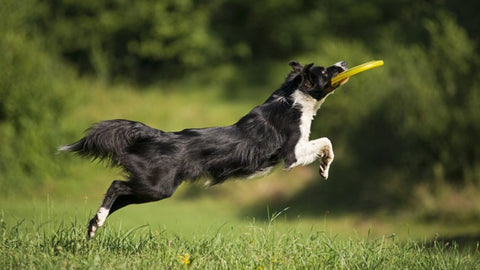 Canine Exercise
