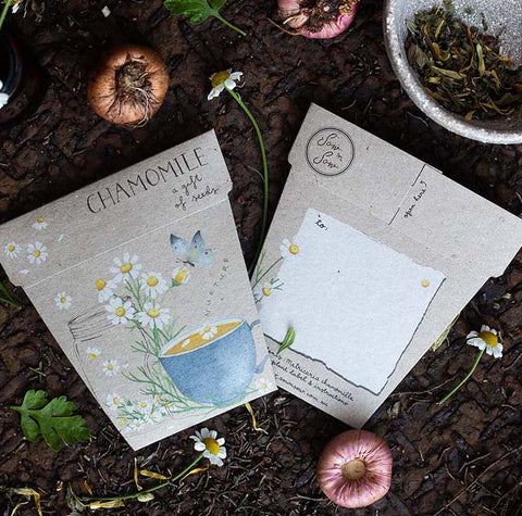 Gift of Seeds - Chamomile