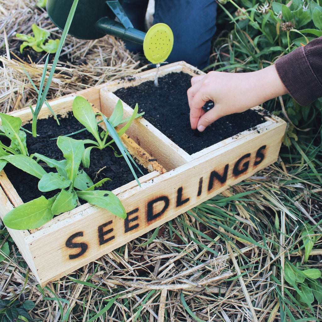 Seedlings Permaculture for Families E-course