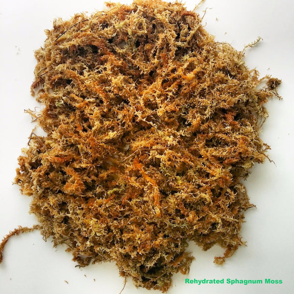 Sphagnum Moss New Zealand Grown Natural