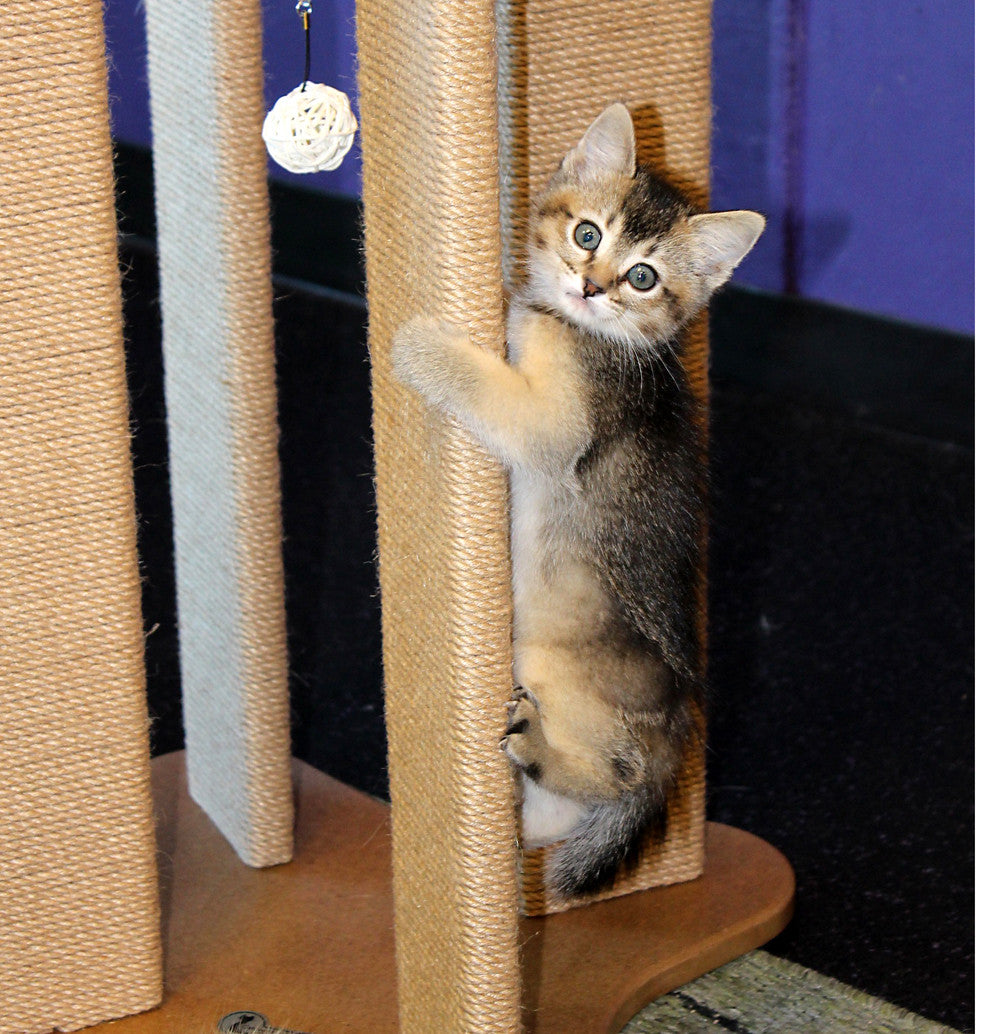 Arched Scratching Post – ShopMeoow com