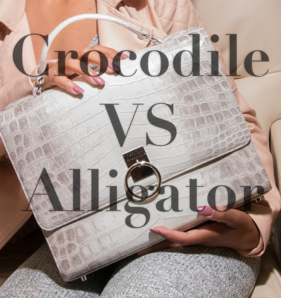 Crocodile VS Alligator: What is the Difference?