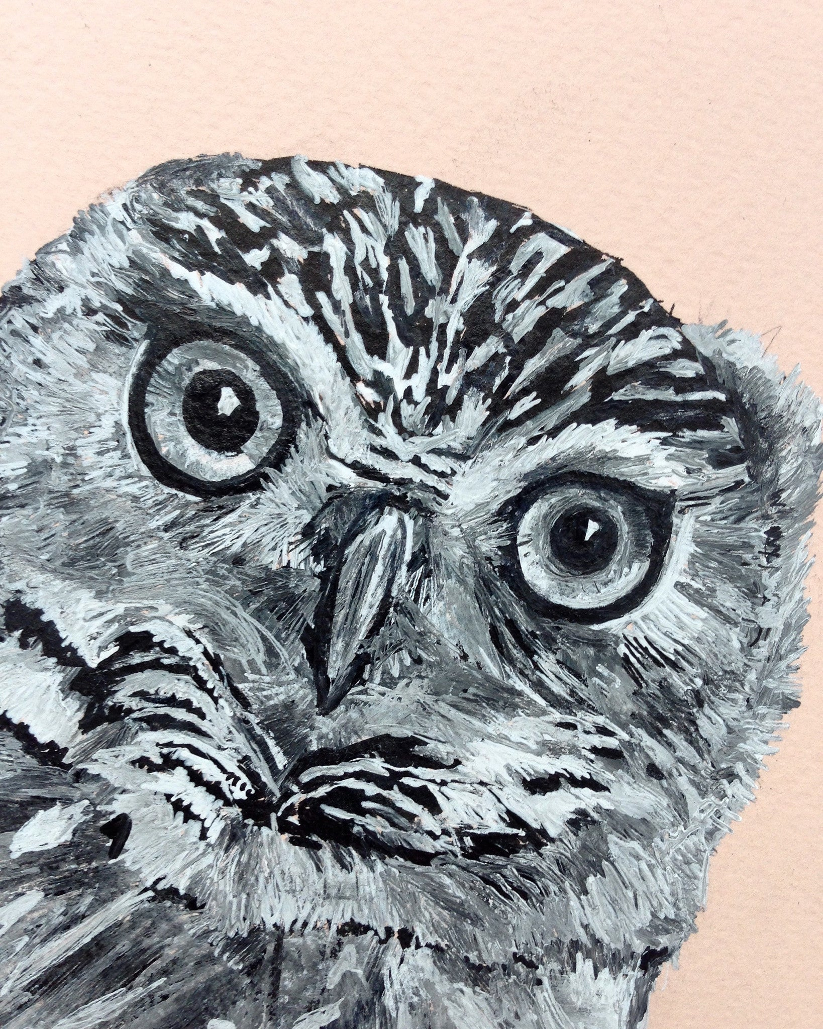 Little Owl Portrait, Pen and Ink