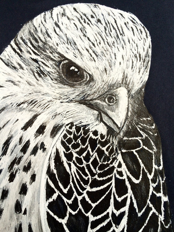 Falcon Ink Portrait