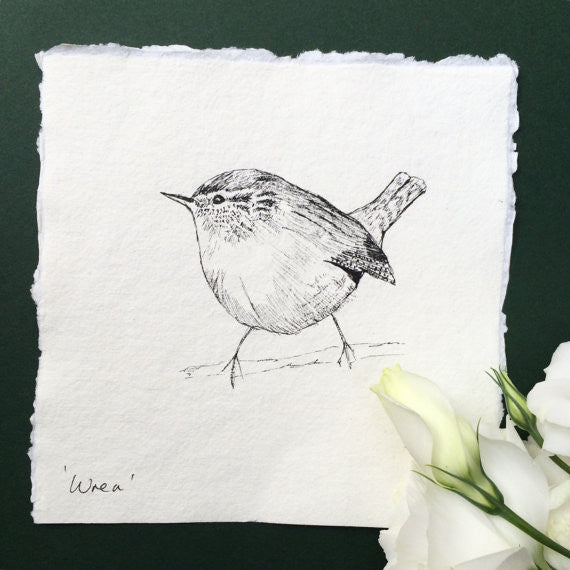 Wren, Original Pen & Ink