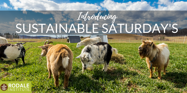 Sustainable Saturday