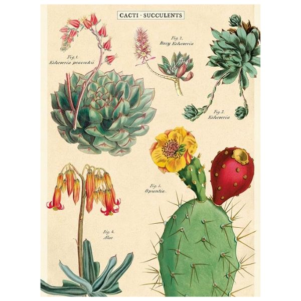 Cavallini Cacti and Succulents 2 Poster