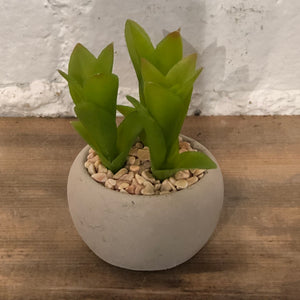 Artificial Succulent in Round Cement Pot, Assorted
