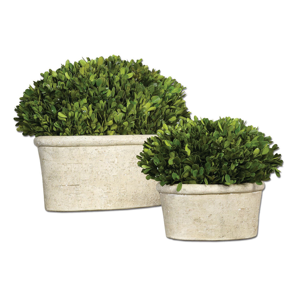 Oval Domes Preserved Boxwood, Set of 2