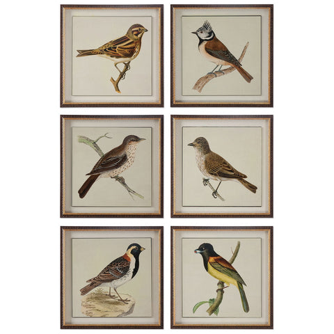 Spring Soldiers Bird Prints, Set of 6