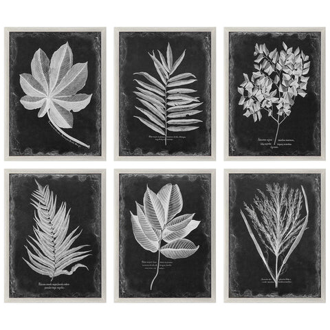Foliage Framed Print, Set of 6