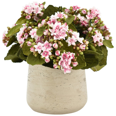 Kalanchoe Bouquet in Cream Planter