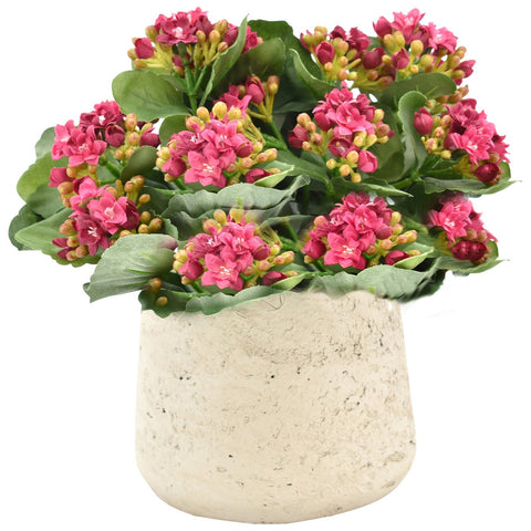 Kalanchoe in Small Planter