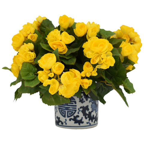 Yellow Begonia in Blue Patterned Pot