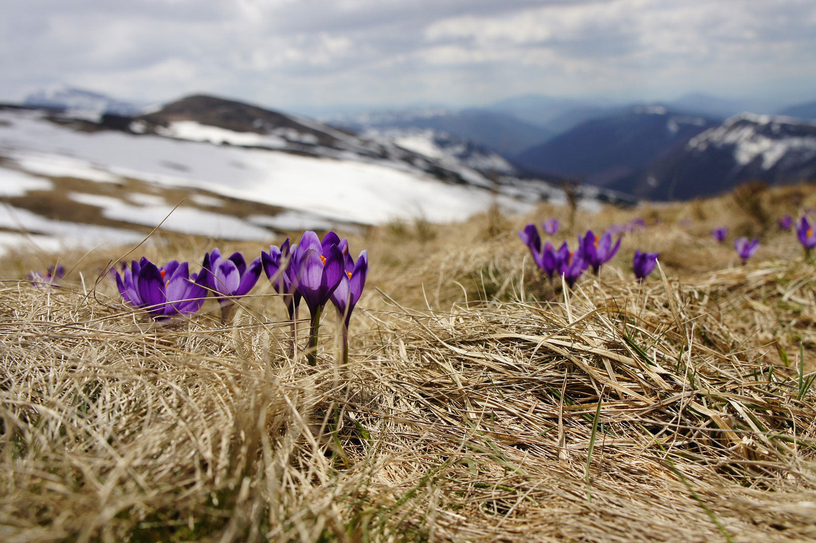 5 Quotes to Inspire Spring Hiking and Backpacking Adventures