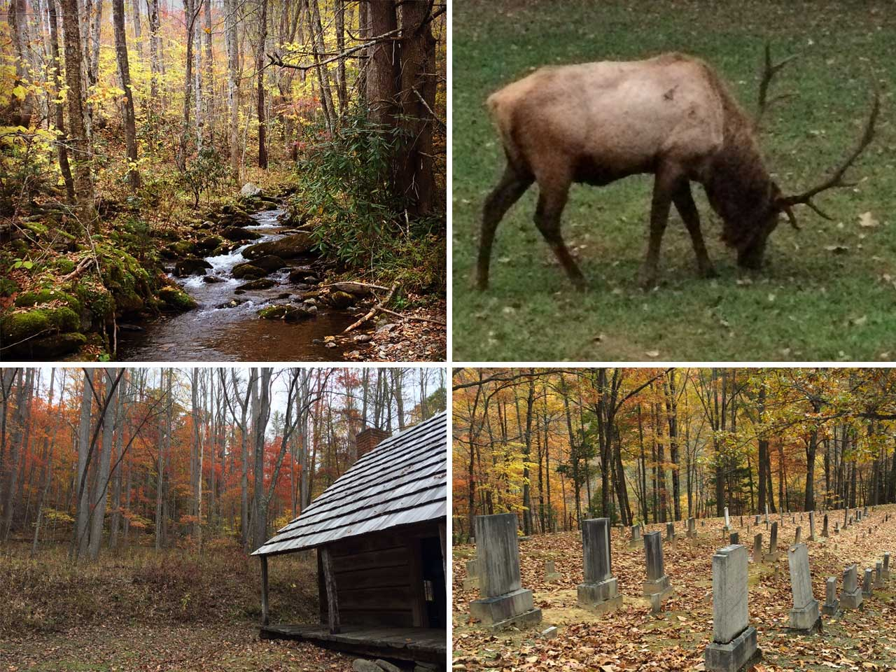 Hiking in North Carolina - Little Cataloochee in Great Smokey Mountain National Park