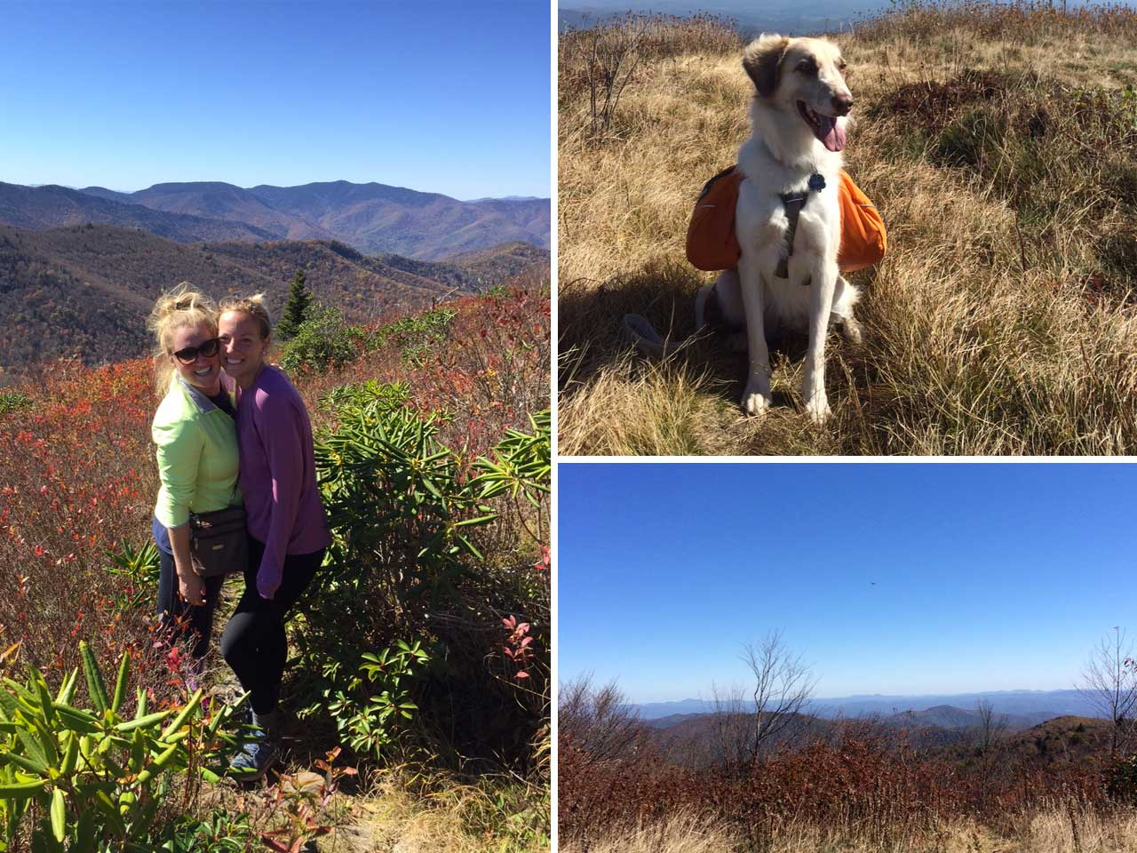 5 Hikes in North Carolina - Black Balsam Knob in Pisgah National Forest