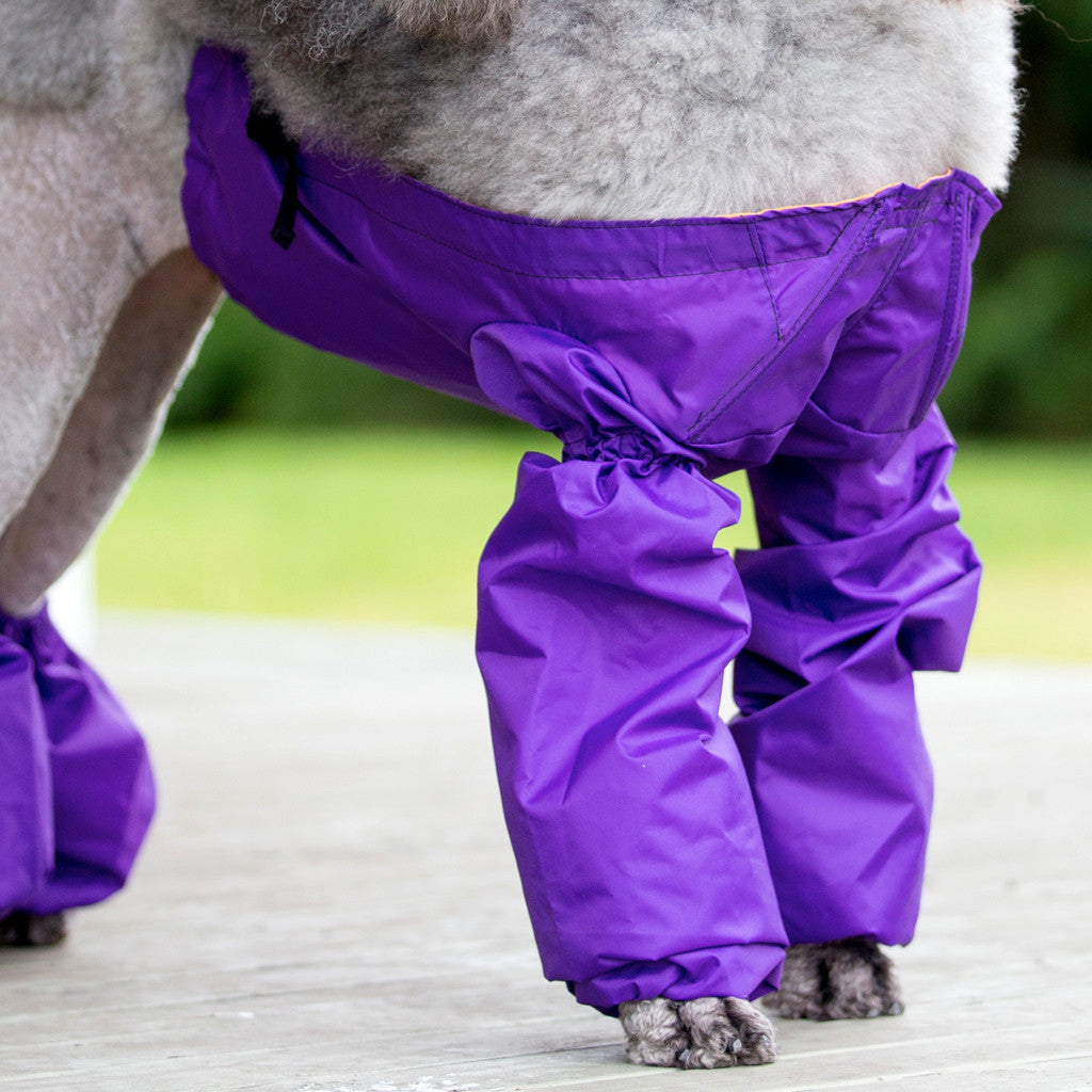 Pee Jacket for Standard Poodles