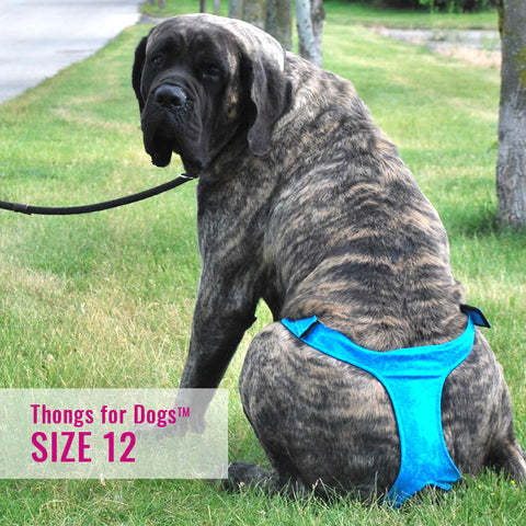 Thongs for DogsTM - SIZE 12