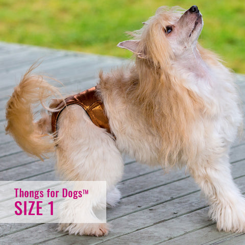 Thongs for DogsTM - SIZE 01