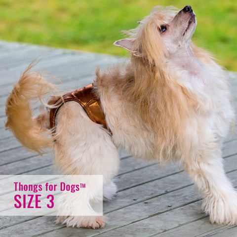 Thongs for DogsTM - SIZE 03