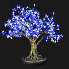 LINDEN - 2'4 Bonsai (Blue)