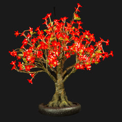 LINDEN - 2'4 Bonsai (Red)