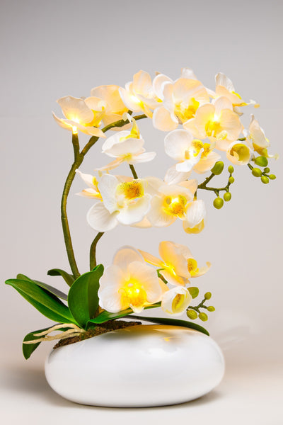 Pretty Valley Home - Artificial Large Oval LED White Orchid flower