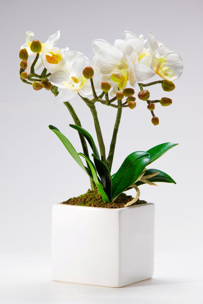 Pretty Valley Home - Artificial Large LED White Orchid flower with vase