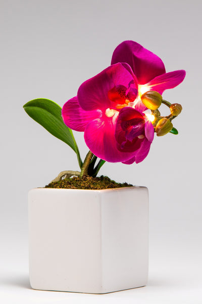 Pretty Valley Home - Artificial Small LED Purple Orchid flower sq vase