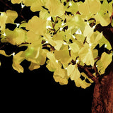 TAYLOR - 4'8 Ginkgo (Color Shift)
