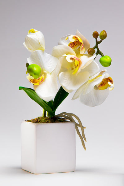 Pretty Valley Home - Artificial Medium LED White Orchid flower sq vase