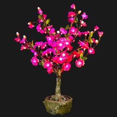 JUNO - 2' Bonsai (Pink)-Battery