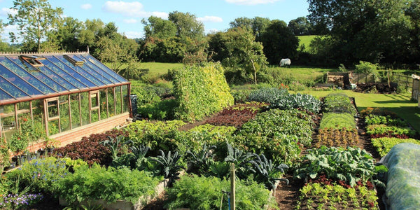 Charles Dowding's No Dig vegetable garden