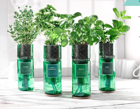 Hydro-herb Kits - Grow Your Own Herbs