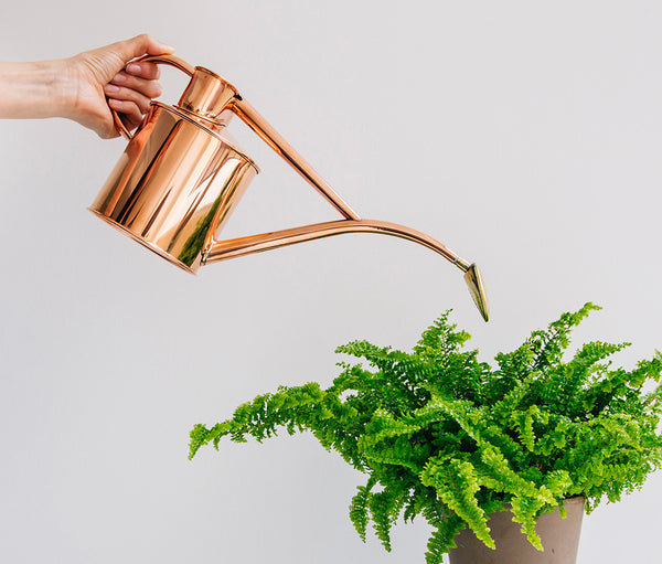 Indoor copper watering can watering a fern