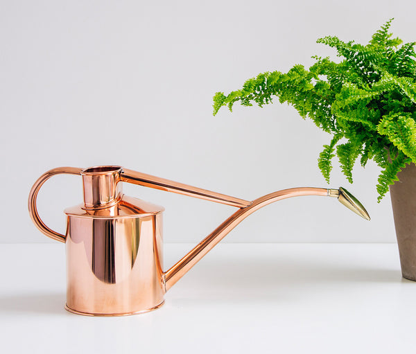 Indoor copper watering can sitting beside a fern in a pot