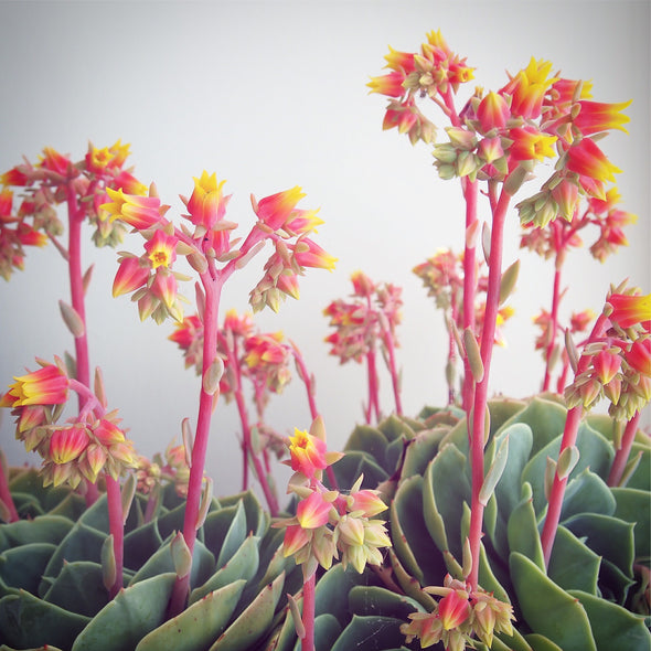 Succulent flowers greetings card